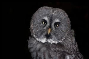 owl-611646_1280